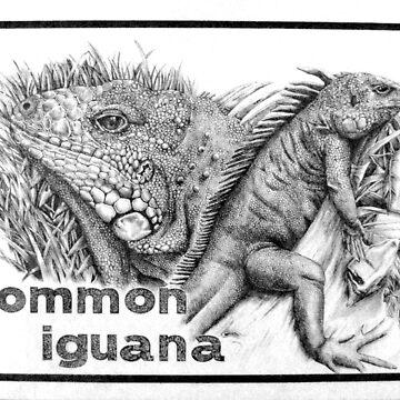 iguana by kelvinlee