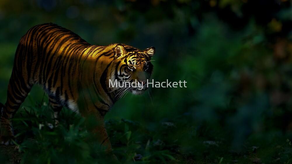Tiger by Mundy Hackett