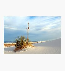 White Sands Evening Photographic Print