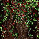 A Pretty Poppy Tree,, did you ever see one by SherriOfPalmSprings Sherri Nicholas-