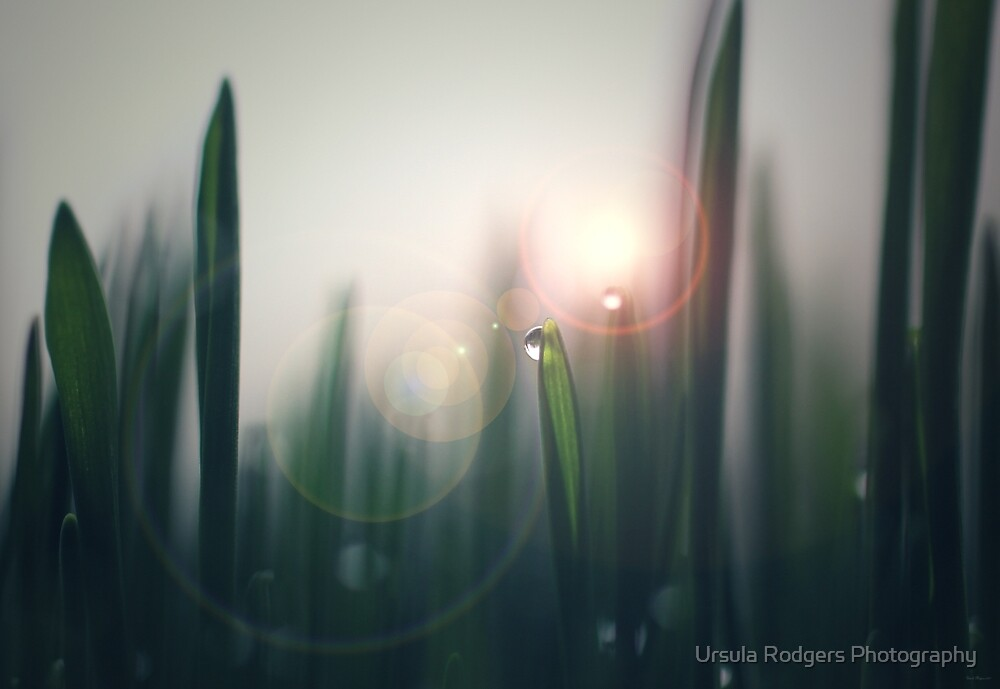 Life by Ursula Rodgers Photography