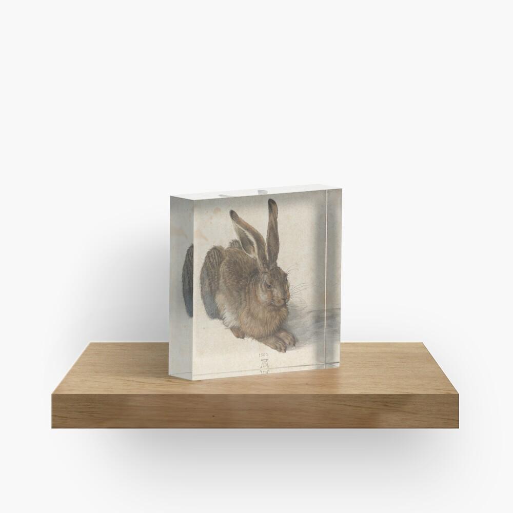 Albrecht Dürer - Young Hare 1502 Acrylic Block