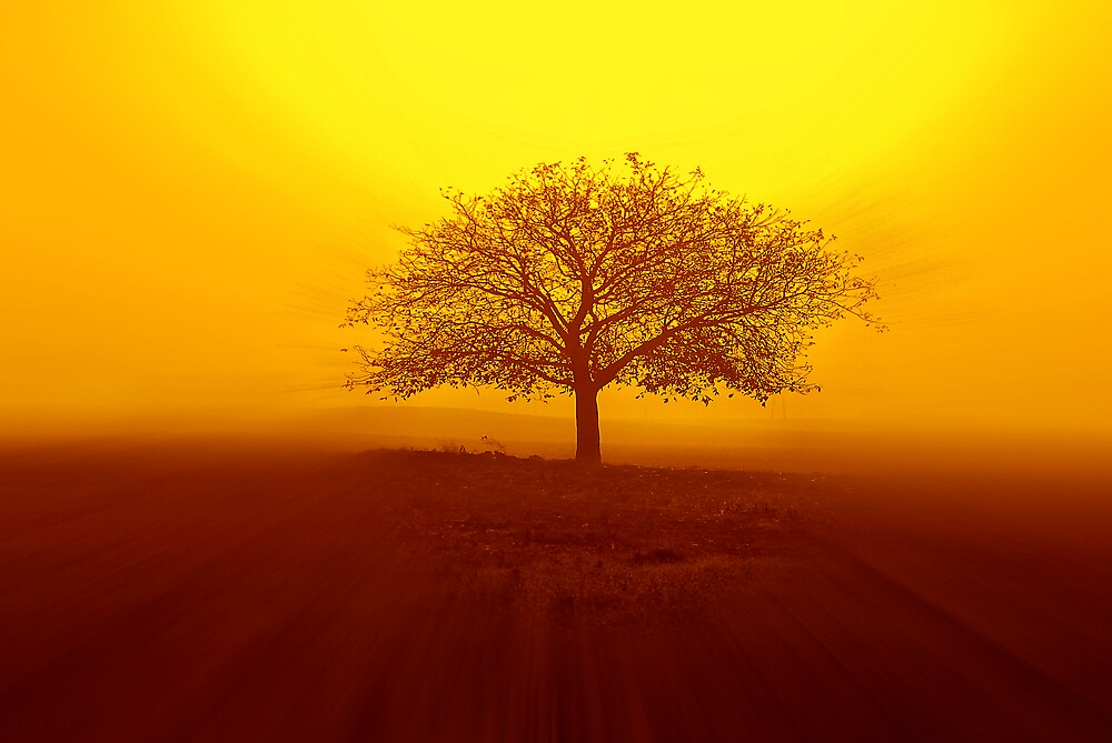 The tree by Philippe Sainte-Laudy