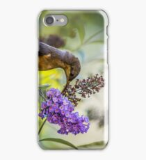 Eastern Spinebill with Buddleja iPhone Case/Skin