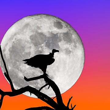 Vulture Silhouetted Against Supermoon by GrahamPrentice