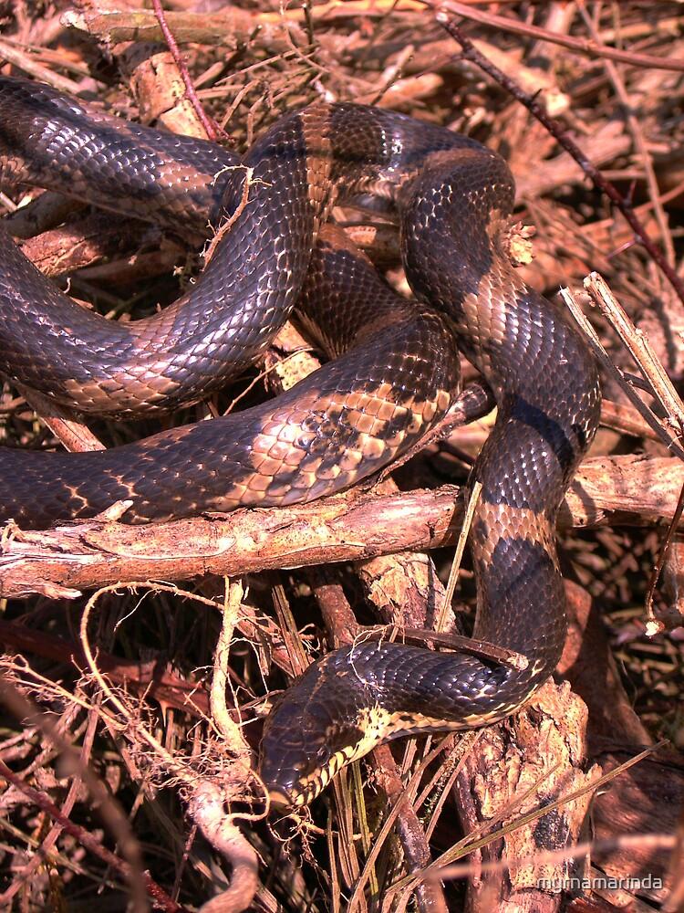 Rat Snake by myrnamarinda