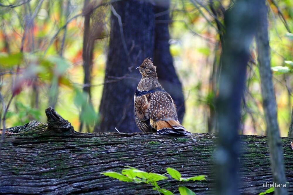 ruffed grouse on log by cheltara