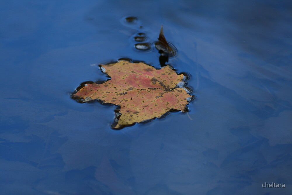 blue leaf by cheltara