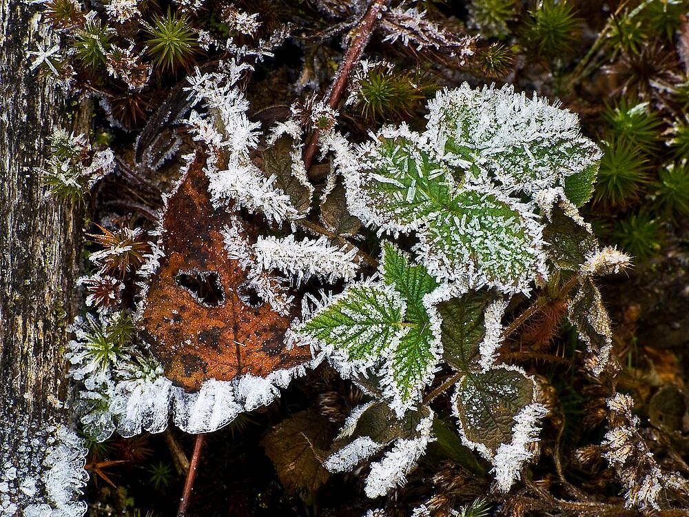 Morning frost by BrigitteC