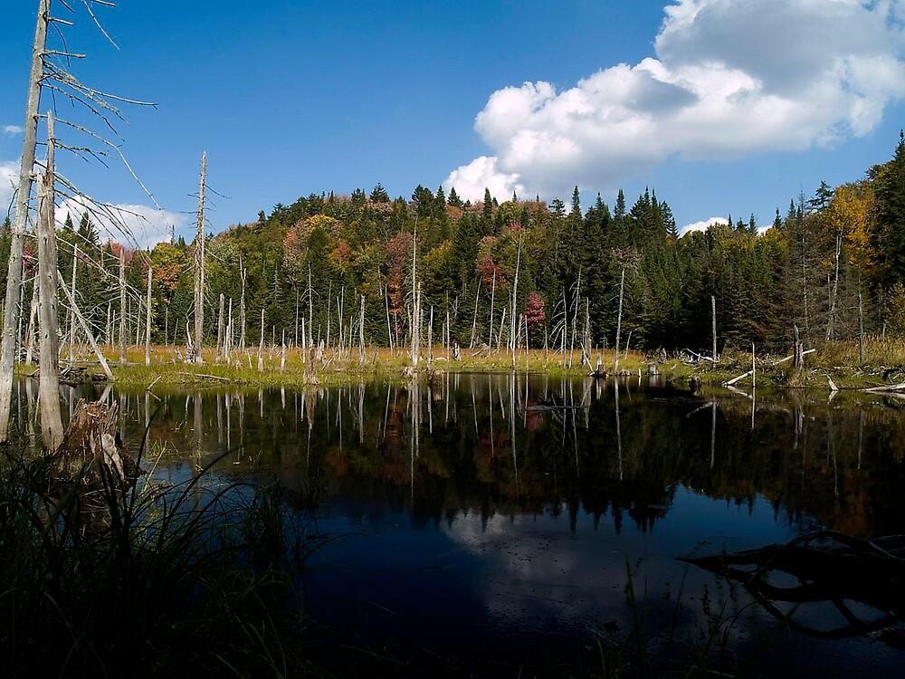 The beaver pond by BrigitteC