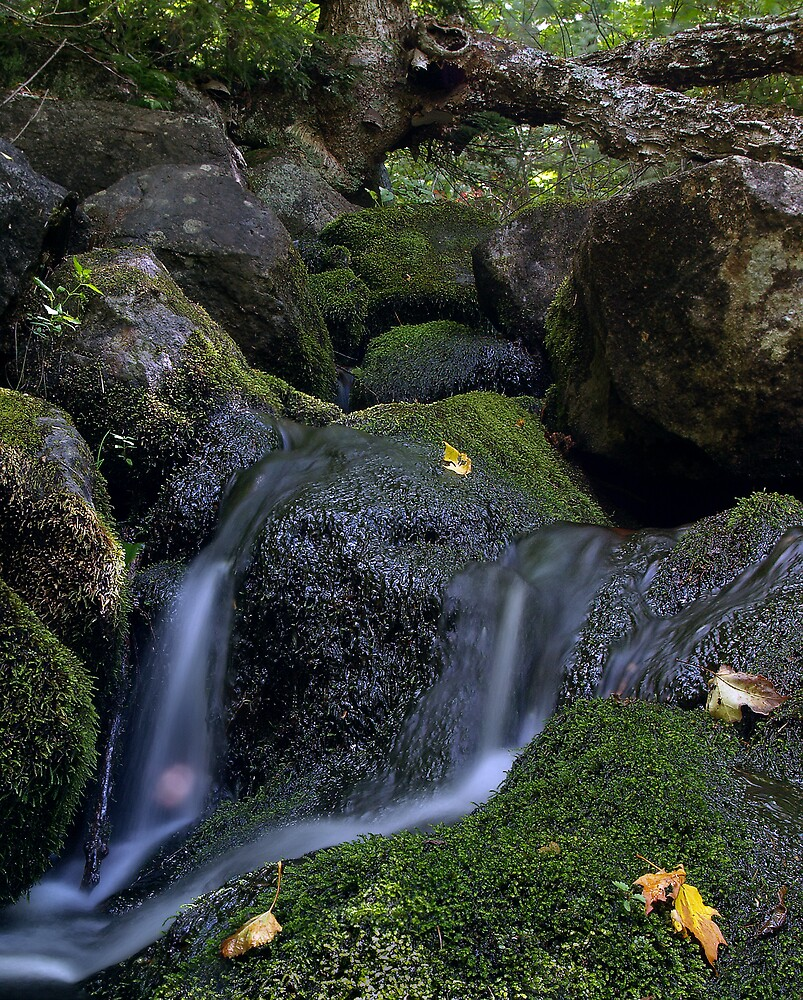 The flow by BrigitteC