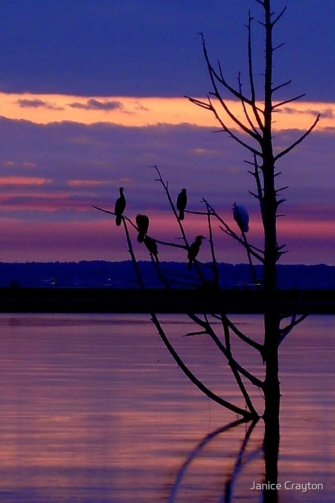 My 50th birthday sunset by Janice Crayton