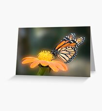 Monarch Butterfly closeup  Greeting Card