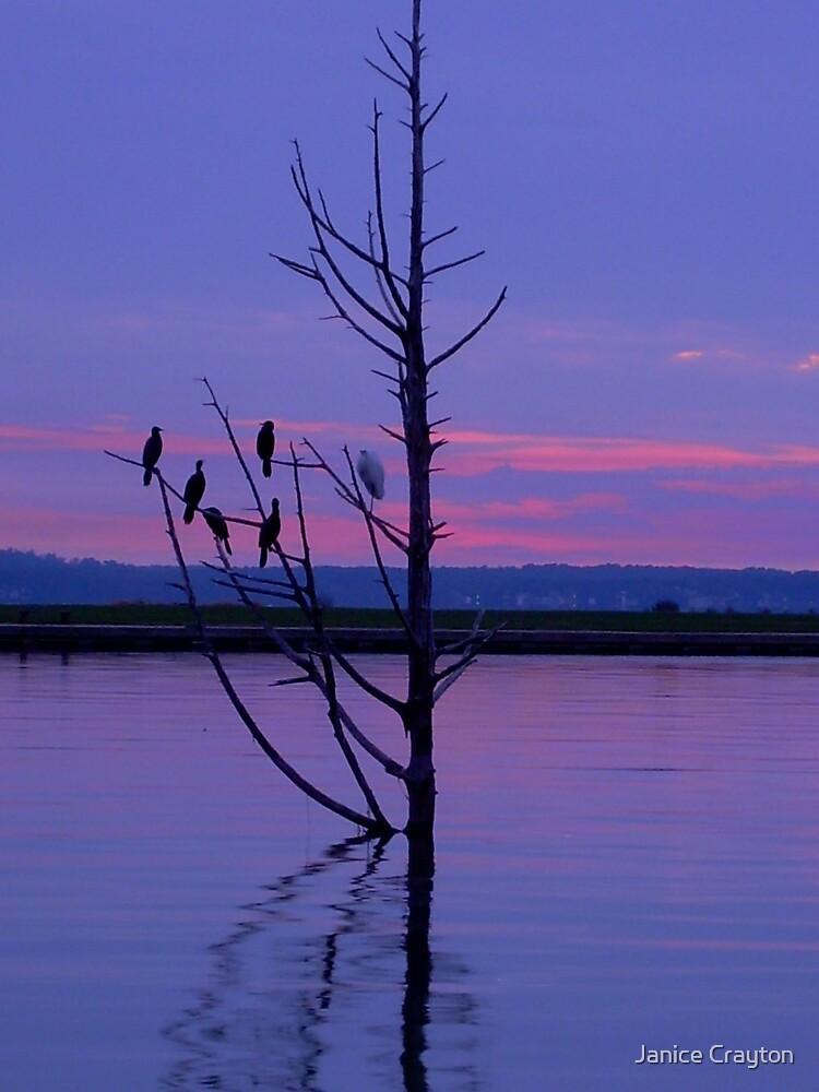 Lovely Lake Livingston Texas by Janice Crayton