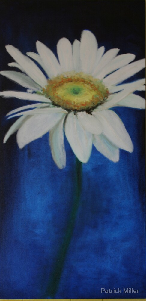Shasta Daisy by Patrick Miller