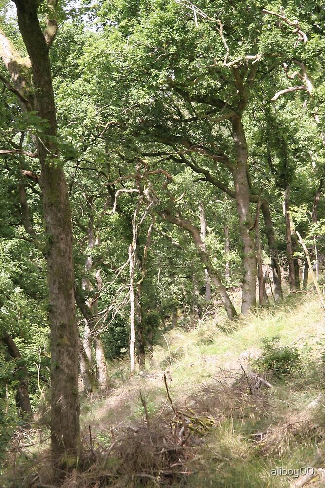 Some random trees by aliboy00