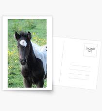 Pony Postcards