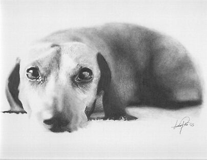Dachshund Pencil Drawing by onlypencil