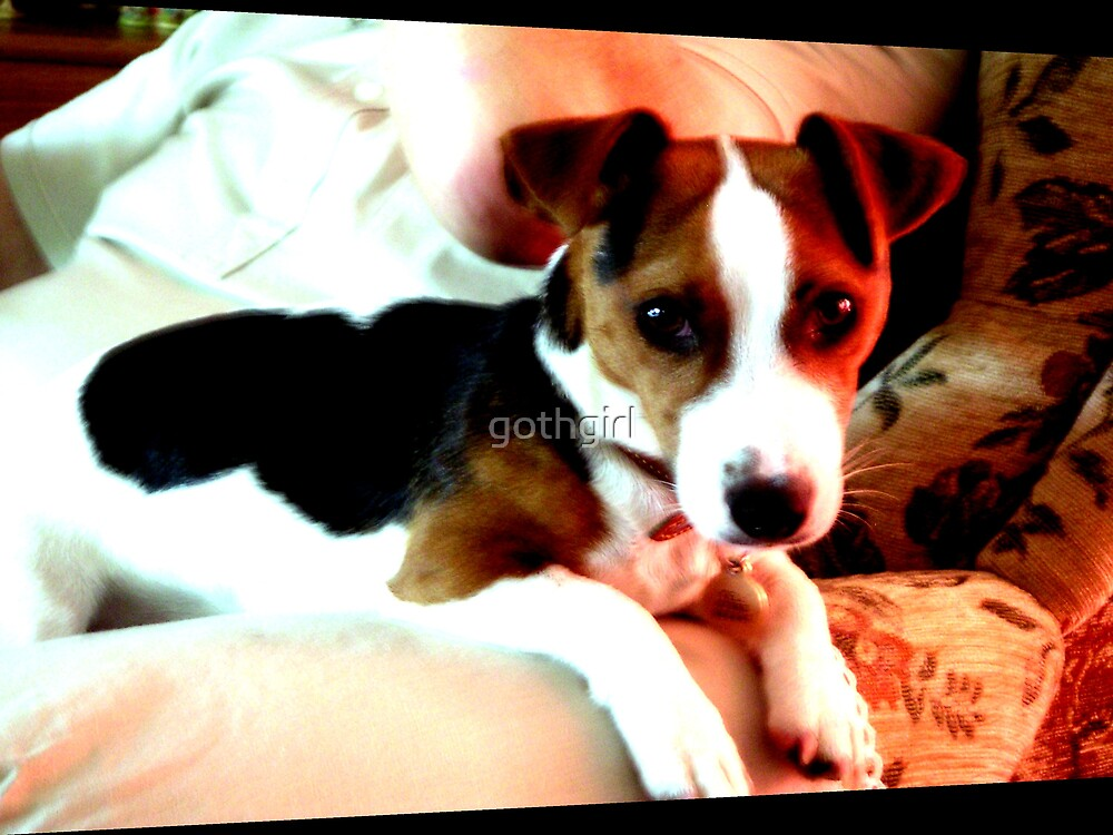 A doggy friend by gothgirl