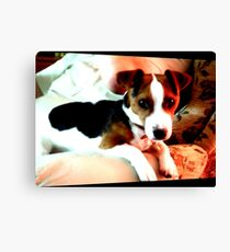 A doggy friend Canvas Print