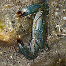 Crab by Shona