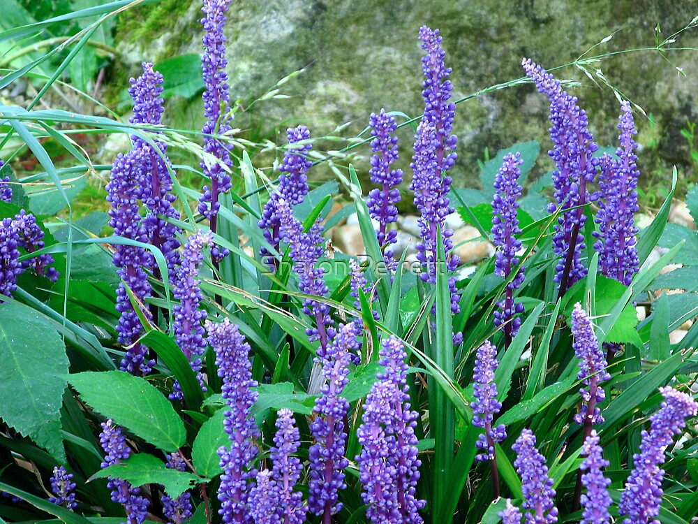 Purple Bobbles by Sharon Perrett
