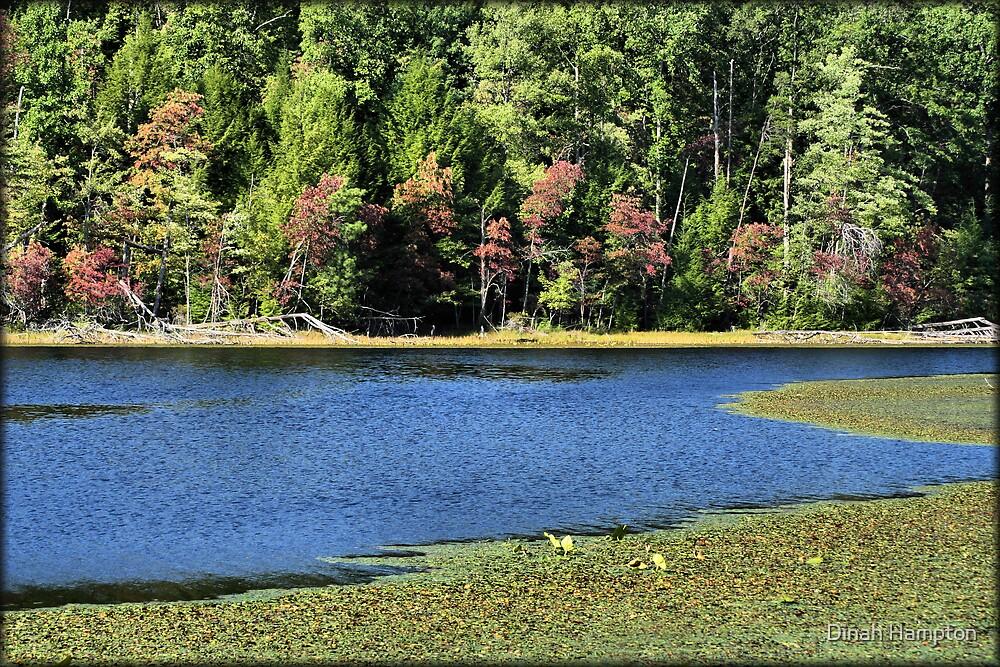 Bays Mountain Lake by Dinah Hampton