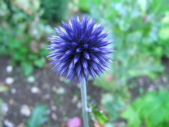 Blue Spike by Sharon Perrett