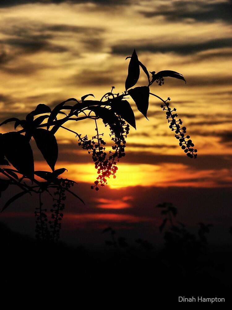 Poke Berry Sunset. by Dinah Hampton