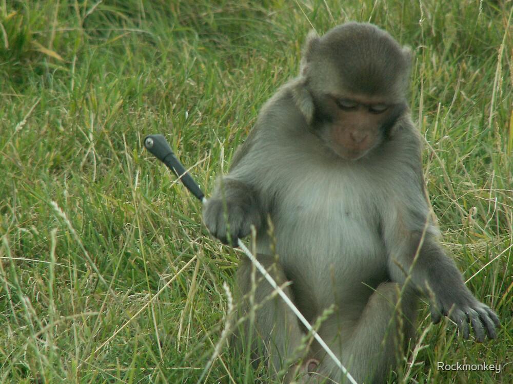 Monkey See, Monkey Do by Rockmonkey