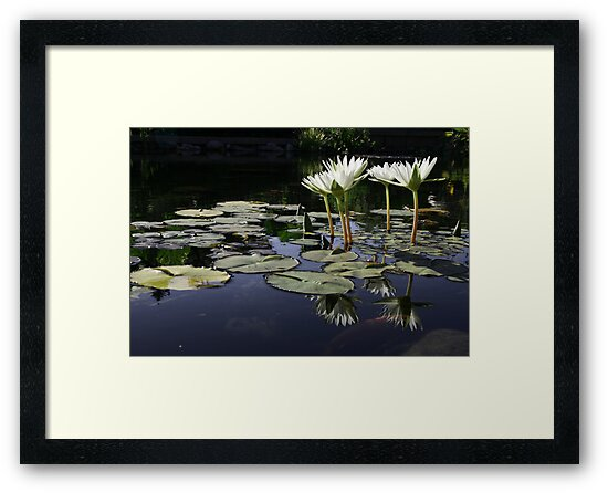 Lilypond by Nikki Moore