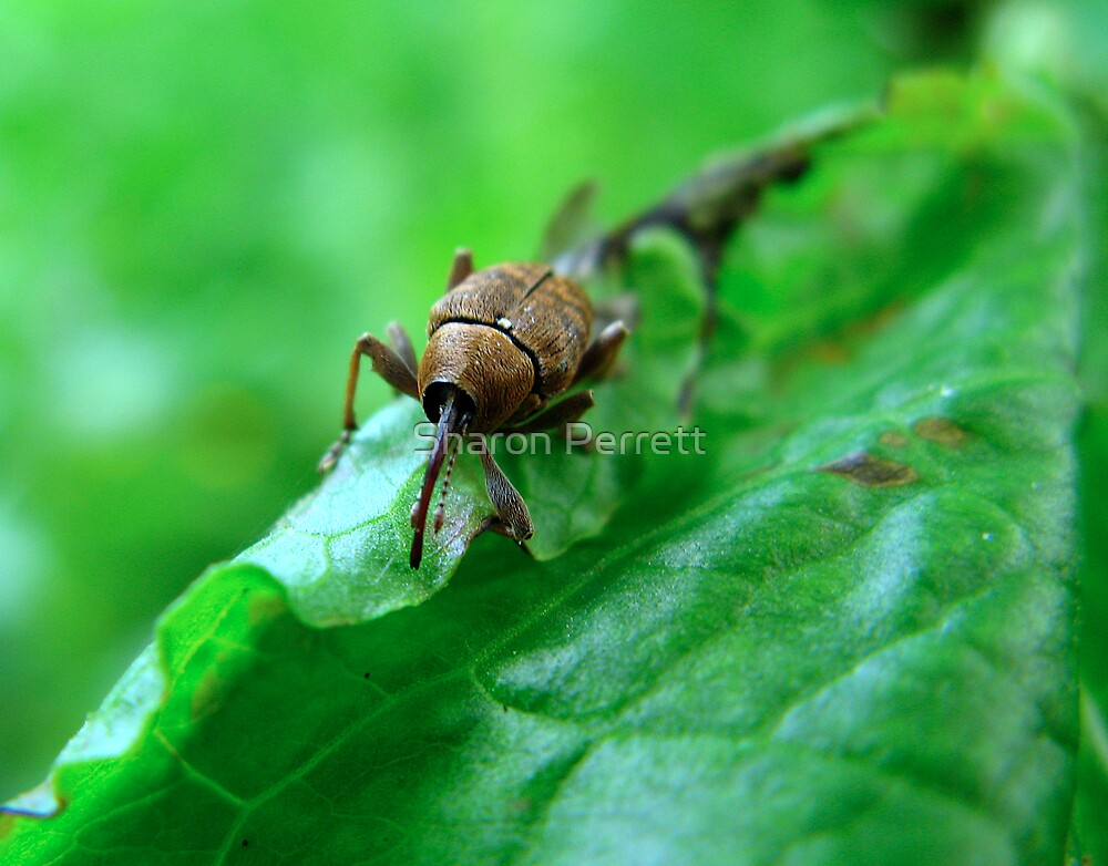 Beetle or Wot?? by Sharon Perrett