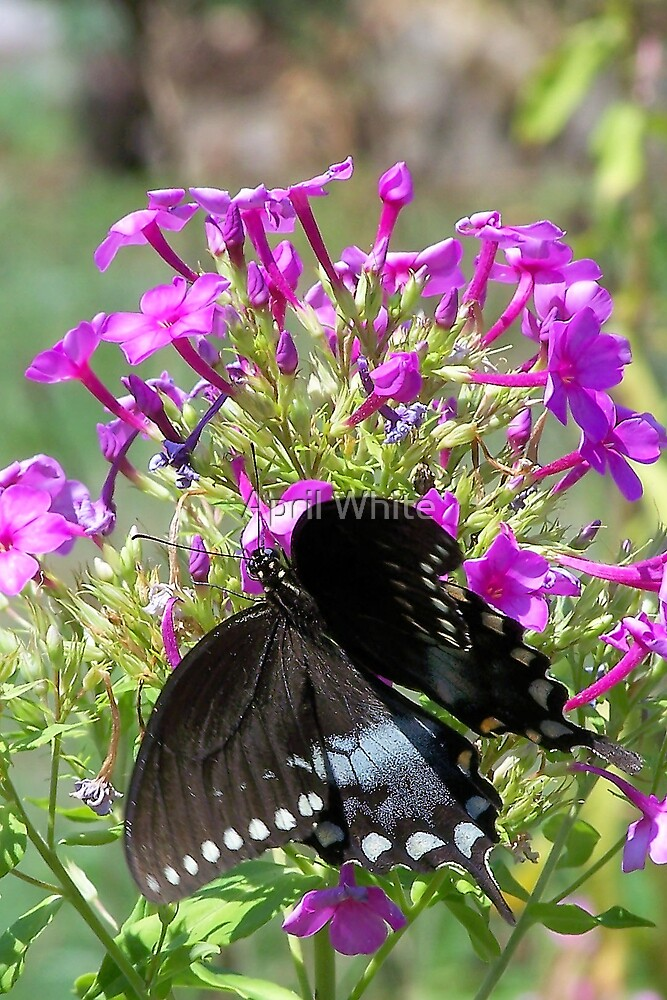 Open Winged Butterfly by April White