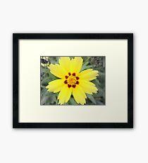 Sunny 2-d Framed Print