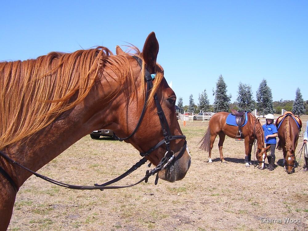 Pony Club Day by Sharna Wood