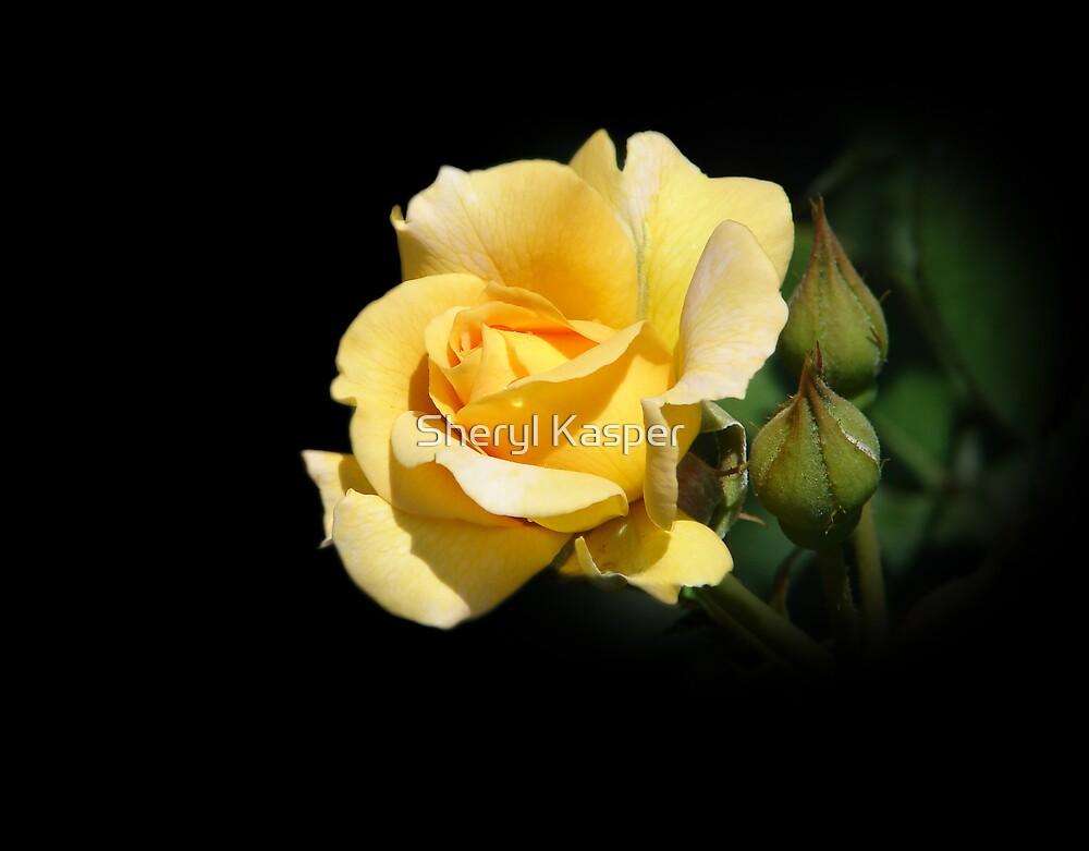 Yellow Rose by Sheryl Kasper