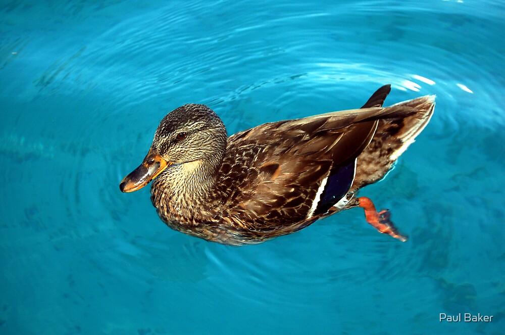 Rippling Duck by Paul Baker
