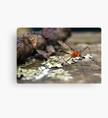 Hey, that's my blood! Give it back! Canvas Print