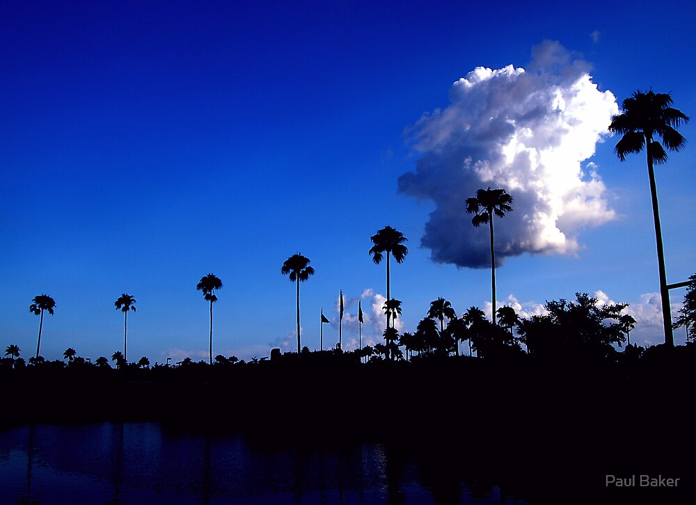 Vivid Palms by Paul Baker