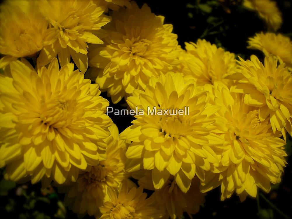 Yellow Dream by Pamela Maxwell