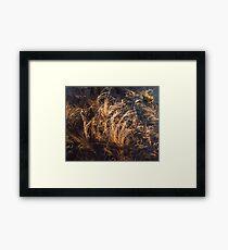 Nova Scotia Grasses Framed Print