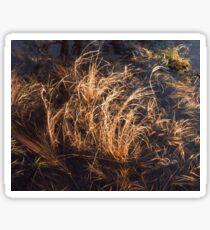 Nova Scotia Grasses Sticker