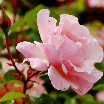 Softness by galziariart