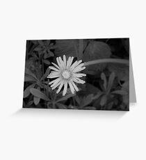 Dandelion in grey scale Greeting Card