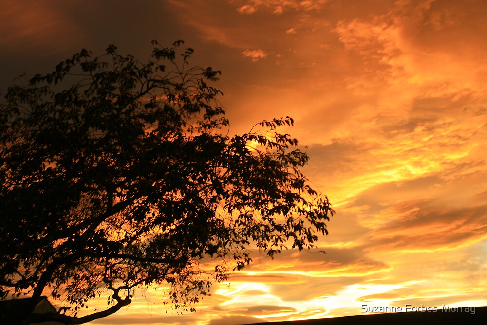 Tree in the Orange Evening Glow. by Suzanne Forbes-Murray