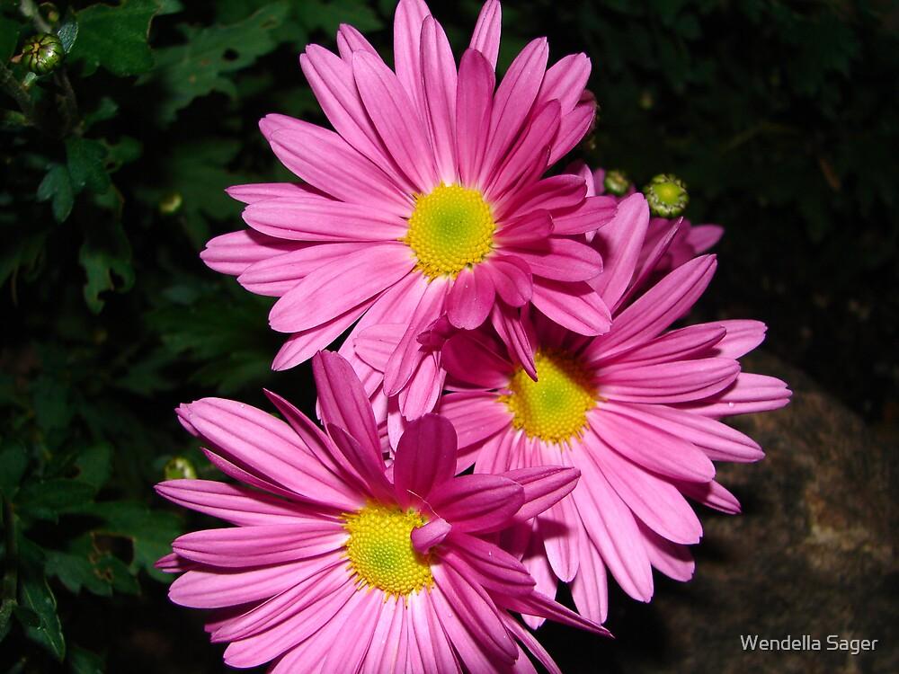 Pink by Wendella Reeves