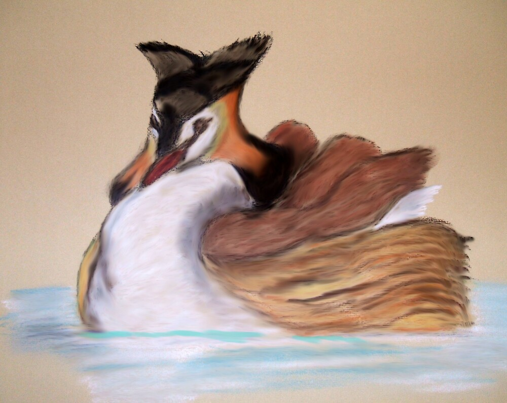Great Crested Grebe by Catherine Brock