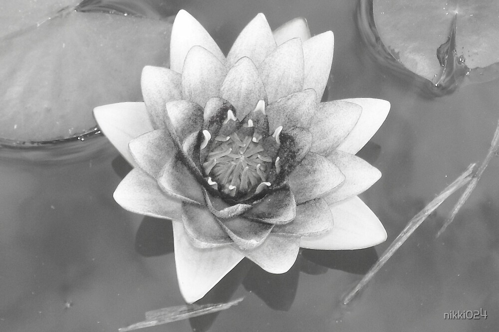 WATER LILY by nikki024