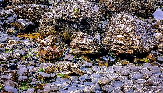 Ireland 'Rocks' - Giants Causeway, Northern Ireland #5 by Lexa Harpell