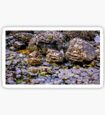 Ireland 'Rocks' - Giants Causeway, Northern Ireland #5 Sticker
